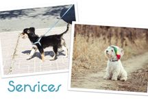 Our Services / How to sign up for world class pet care today!