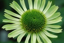 Plant Catalogs