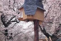t r e e h o u s e s / #tree #houses