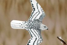 Birds - Northern paleactic region - Iceland, Greenland, Scandinavia, Russia