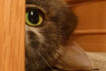 Gatotes / Y son los gatos los que dominaran el mundo / by Paco Alcaide