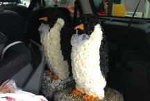 Penguins / Our penguins journey from Val Spicer in the South Pole to our Chelmsford store window, to a loving home.