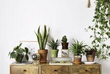 """Plantes dépolluantes / Ce sont des végétaux qui retirent une partie de la pollution dans nos intérieurs. Utile non ? Il ne nous viendrait pas à l'esprit que votre """"chez vous"""", votre bulle, votre cocon, n'est pas aussi pur qu'il n'y paraît ! Le végétal possède différents bienfaits pour nous l'humain."""