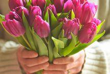 Tavasz, virágok