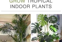 Tropical indoor Plants