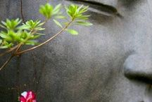 BUDDHA & Zen Gardens