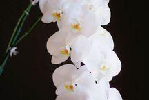 .Flowers