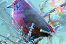 Vibrant Birds / by Melissah Miller