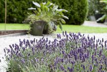 Kant trädgård