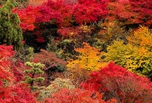 AMAZING  JAPAN / Japan  seen  by  me  and  othe  lovers  of  Asia / by didona balazs