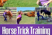 Horse trick training