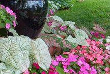 Pflanzen für den Schatten