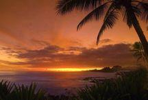 Tropical    / by Shelley Hartmann