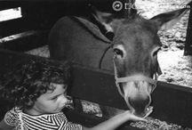 http://elgrecocosmetics.com/5-amazing-benefits-of-handmade-natural-donkey-milk-soap/