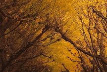 Paths and Trails And Trees / by Janice Swann