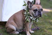 Pets at weddings!