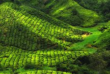 Natural beauty of Kerala