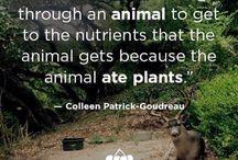 Vegan / nutrition information