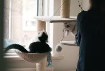 FELIWAY FRIENDS / FELIWAY FRIENDS vermindert spanningen en conflicten tussen katten in huis en zorgt ervoor dat ze gelukkig samen onder één dak kunnen leven.