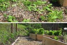 Way To Weeds in Garden.