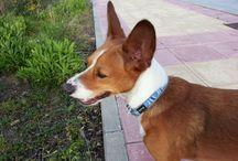 Samsung dog Sammy