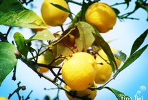 I Love Lemons / by Tina Liel