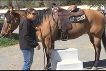 Back in the Saddle / Articles and resources about riding and conditioning horses