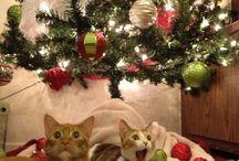 Chrismas miau & haw