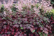 Trädgård - Växter