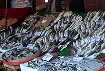 fish immagini
