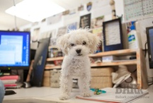 Daily Show Dogs