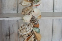 My shells collection