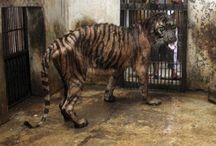 Animal Rights / Do caged animals deserve this? wonder who the real animals are