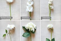 Flowers: White / by Shannon Qualls