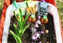 Gardening/ flowers/ spring