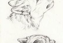 동물 스케치  이미지