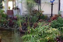 My Tropical Mindanao Secret Garden