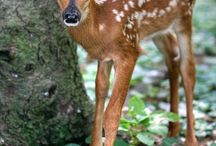 Art | References | Deer