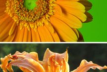 Flower examples / by Chunda Greathouse