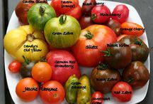 Heirloom Gardens / A beautiful collection of heirloom veggies for your growing and eating pleasure!