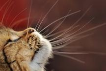 Cats / by Gisela Sedlmayer