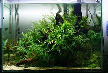 アクアリウム - 陰性水草