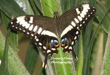 Butterflies / Nature