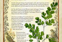 Pflanzenverwendung_Heilung