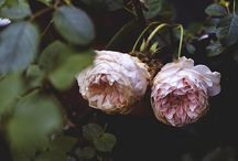 vegetatie-flori
