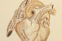 Sydänainesta