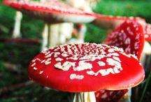 Funghi-Molluschi-Licheni / Eduli e non