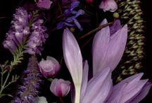 Flowers' pannel