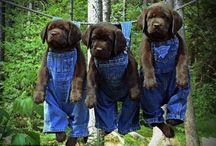 Dogs Emy