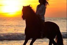 Allgemein Pferde ♧